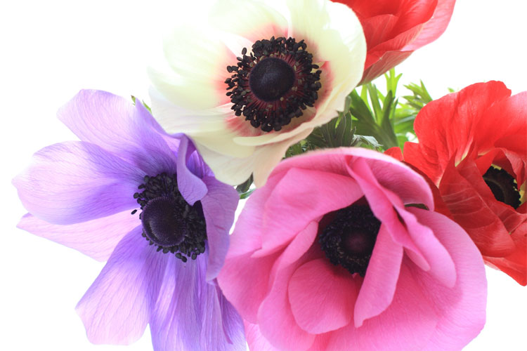 fakta om blommor