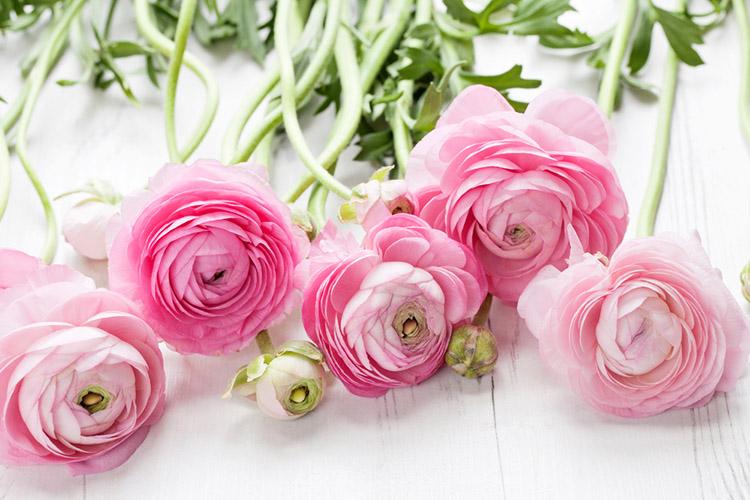 köpa rosor antal