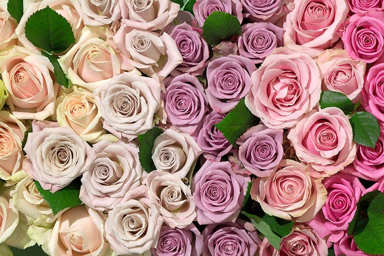 vad betyder rosornas färg