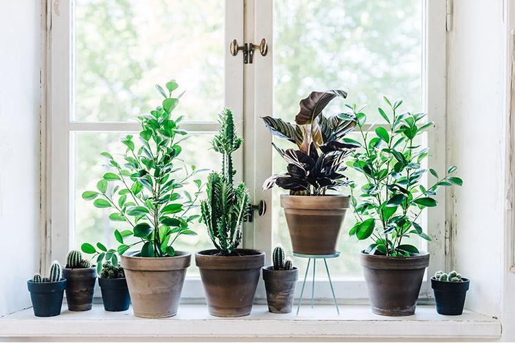 växter inomhus inspiration