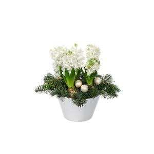 Julgrupp Hyacintfrossa