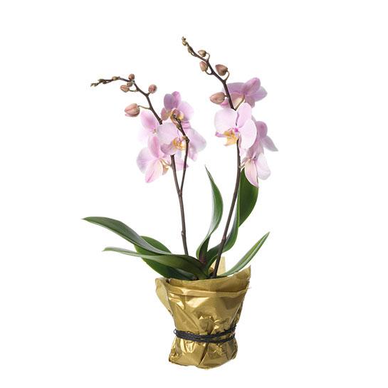 beställa växter online