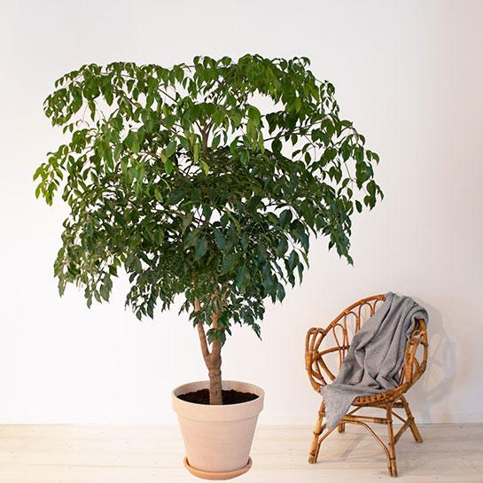 köpa gröna växter online
